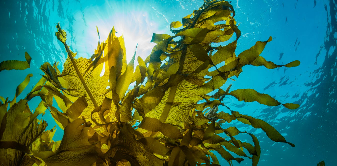 £350k grant for Byotrol and Liverpool University to explore the anti-viral properties of seaweed