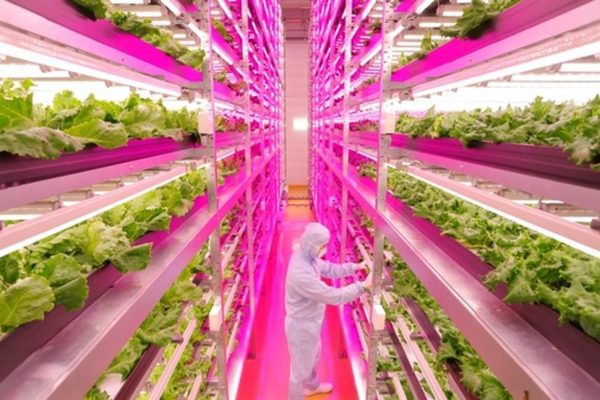 vertical-farm-600×400-600×400
